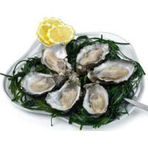 Oysters creuses nr.3 (12pces.)